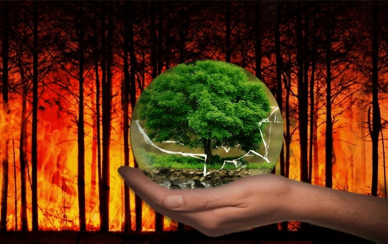 3 Side-Effects On The Environment – When Businesses do not Consider the Environment