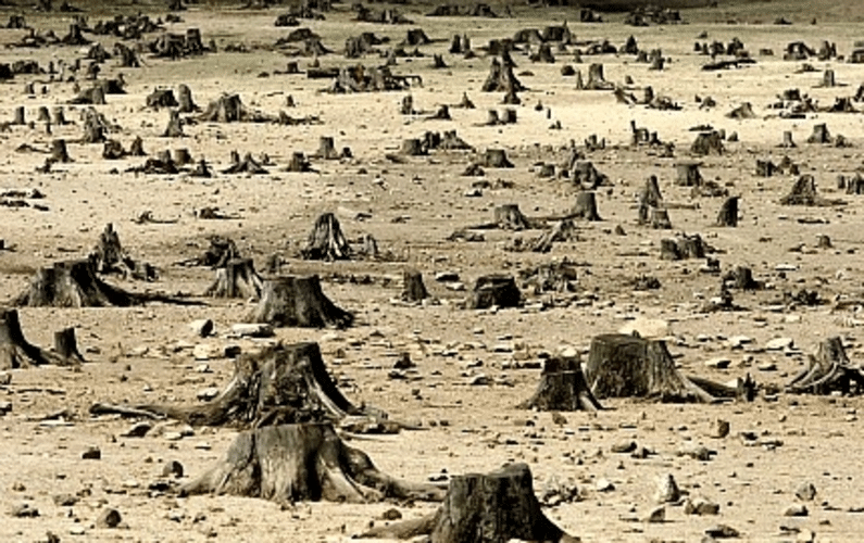 Devastated Land with stumps - Healthy Sugar Substitute Aspartame Side Effects