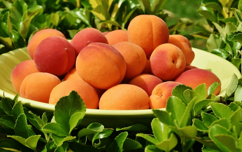 Unlock Your Health University - Gallery Fresh Apricots