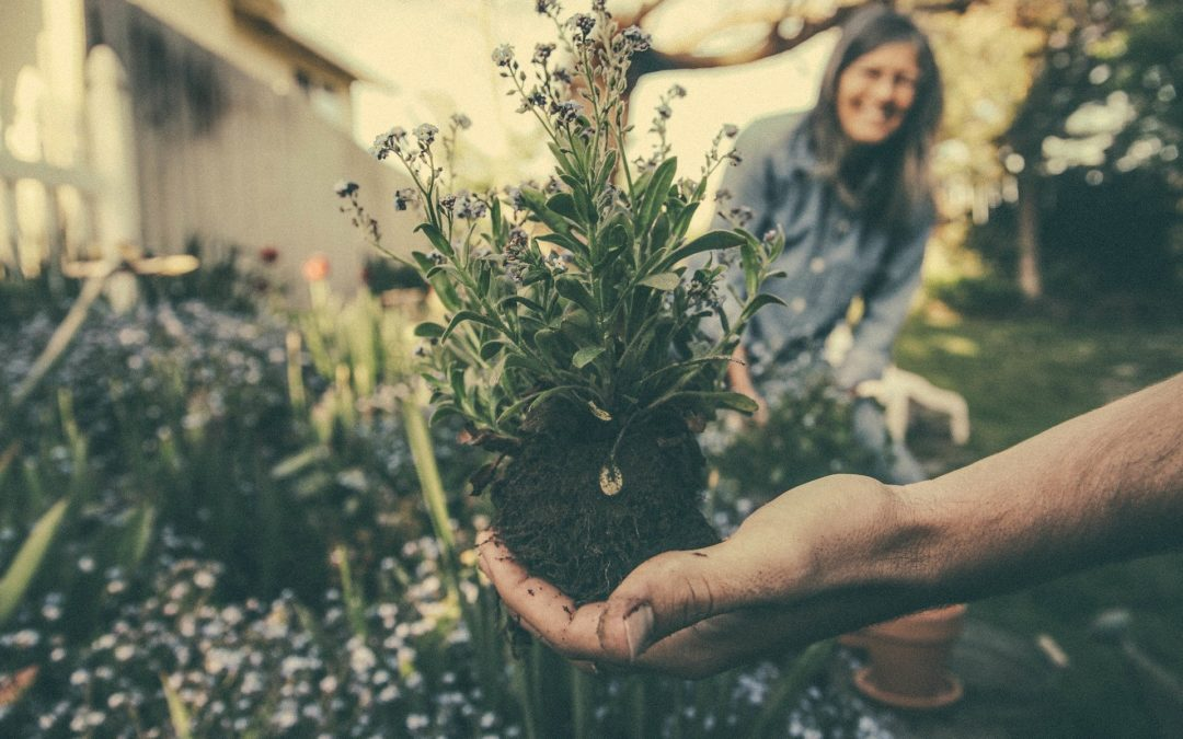 Plant A Flower Day 2020
